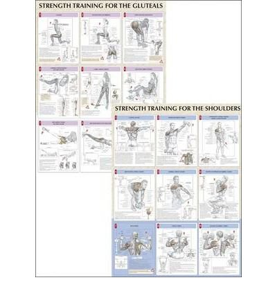 Strength Training Anatomy Poster Series Free Download Hp