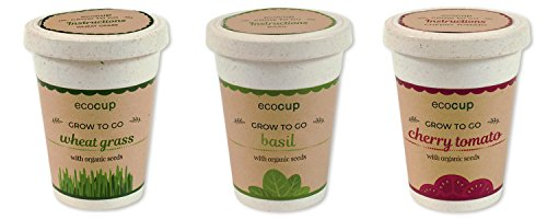 Easy to Grow Herb Planter Cup (Cherry Tomato, Basil and Wheat grass) Rice Grass