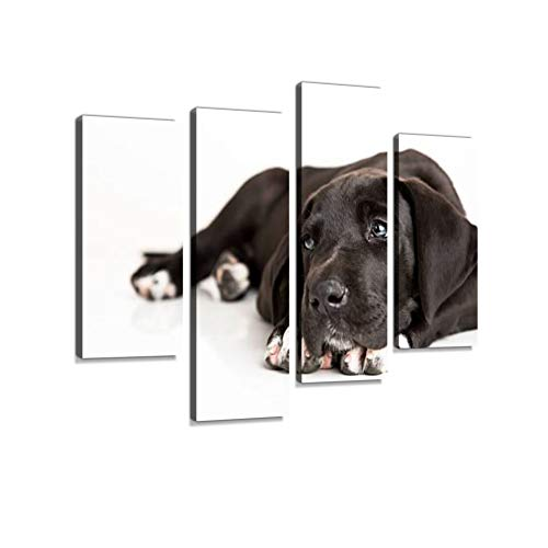 Black Great Dane Puppy Isolated on White Canvas Wall Art Hanging Paintings Modern Artwork Abstract Picture Prints Home Decoration Gift Unique Designed Framed 4 Panel