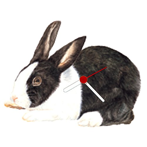 Haddington Green Equestrian Art Dutch Rabbit