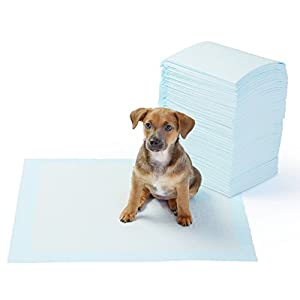 Amazon Basics Dog and Puppy Leak-proof 5-Layer Potty Training Pads with Quick-dry Surface, Regular (22 x 22 Inches) – Pack of 100