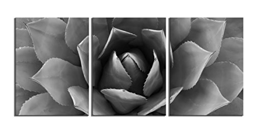 Youk-art Plant Wall Art Black And White Agave Canvas Prints Agave Flower Stretched And Framed Artwork Canvas Printing Canvas Wall Art Print 16 x 36 Inch Total Deco Gift Black And White, 16x36inch