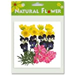 Silver-J-Pressed-flower-mixed-flowers-2-packs-Delphinium-Pansy-Chrysanthemum-Foliage