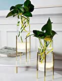 MJ PREMIER Glass Vase Flower Plant Table Tube Vase Planter Terrariums with Battery Operated LED Timing Function Cylinder Vase Clear Vases wifh Plant Stand Decor for Home Indoor Centerpiece Decoration.