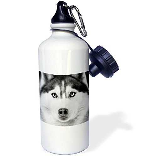3dRose wb_11326_1 Siberian Husky Sports Water Bottle, 21 oz, White (Husky Siberian Bottle Water)