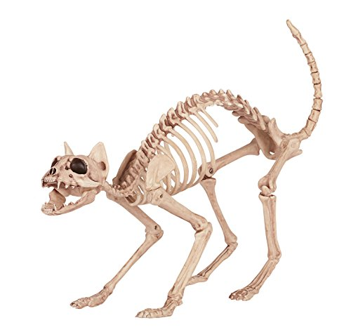 Crazy Bonez Skeleton Cat
