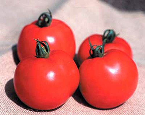 Better Boy Tomato 35 Seeds - Garden Fresh Pack!