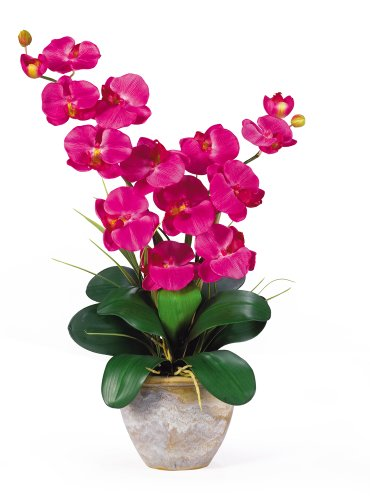 Phalaenopsis Orchid Flower (Nearly Natural 1026-BU Double Phalaenopsis Silk Orchid Flower Arrangement, Beauty)