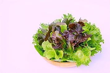 Home Garden - Mezcla de variedades de lechuga - para cultivo en interiores y balcones -