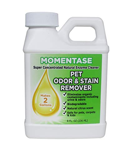 Momentase Natural Enzyme Cleaner Concentrate High Strength Pet Odor & Stain Remover Non-Toxic Makes 2 Gallons of Solution for Dog & Cat Urine, Feces, Vomit, Organic Soils ()