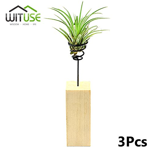 WITUSE Large size wooden Air Plant Holder wire plant stand tillandsia holder Stainless Steel Wire Air Plant Stand Air Plant Holders air plant Display Rack-3 Pcs
