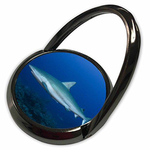3dRose Danita Delimont - Sharks - Caribbean Reef Shark - Carcharhinus perez, Jardines de la Reina NP - Phone Ring - Photograph Perez