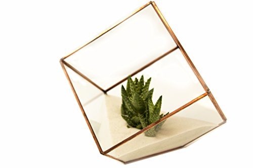 Glass Terrarium Cube With Rose Gold Trim By Oh So Relevant