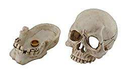 Human Skull Shaped Incense Burner Box