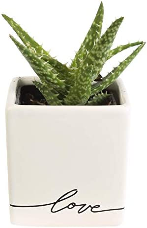 Costa Farms Live, Mother's Day Gift Love Balloon Ceramic, Mini Aloe, Green