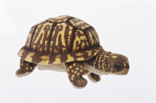 Box Turtle Plush Toy By Cabin Critters 11