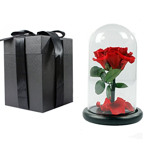 red immortal rose, Preserved by Real Rose ,with a beautiful glass cover, is a perfect gift for valentine's day /Christmas/ girlfriend's birthday (Small)