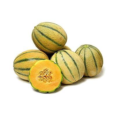 Tuscan Cantaloupe - Super-Sweet, Juicy Fruit! - Sweet Aroma, Rich Flavor!! Mmmm (25 - Seeds): Garden & Outdoor