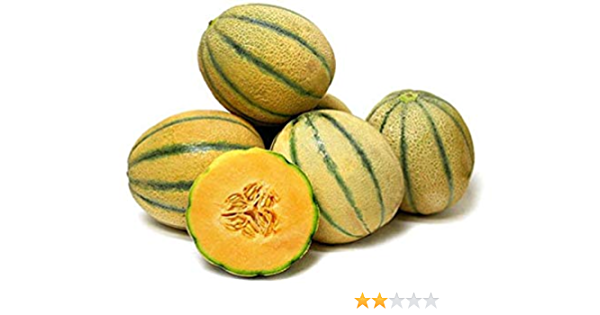Amazon Com Tuscan Cantaloupe Super Sweet Juicy Fruit Sweet Aroma Rich Flavor Mmmm 10 Seeds Garden Outdoor Cantaloupe was introduced to europe in the 15th century and became a popular fruit due to its sweetness. amazon com tuscan cantaloupe super