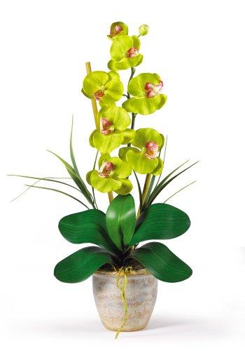 Nearly Natural Phalaenopsis Stem (Nearly Natural 1016-GR Phalaenopsis Silk Orchid Flower Arrangement, Green)