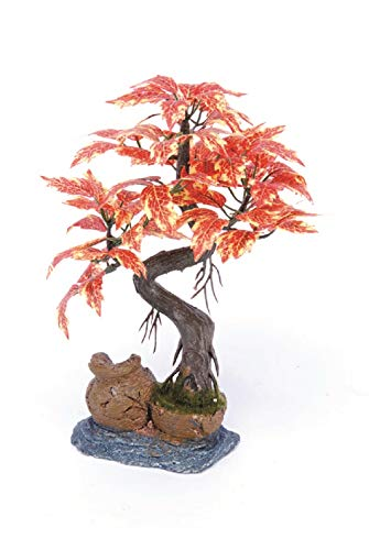 Pennplax Red Bonsai Tree