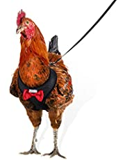Yesito Chicken Harness Hen Size with 6ft Matching Leash – Adjustable, Resilient, Comfortable, Breathable, Small, Suitable for Chicken Weighing About 2.2 Pound,Black