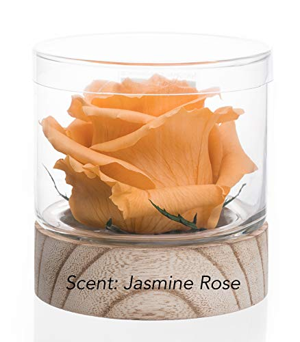 Sustainable Home Scent 12oz A Real Fragrance Flower with Lasting abilities Similar to Scented Candle, Wax and Aroma Diffuser (Amber/Fragrance Papillon de Versailles)