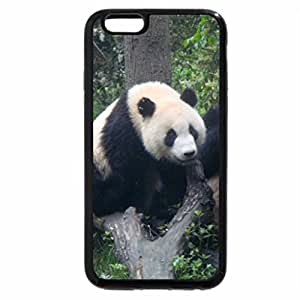 iPhone 6S Plus Case, iPhone 6 Plus Case, Giant-Panda-At-Chendgu-China
