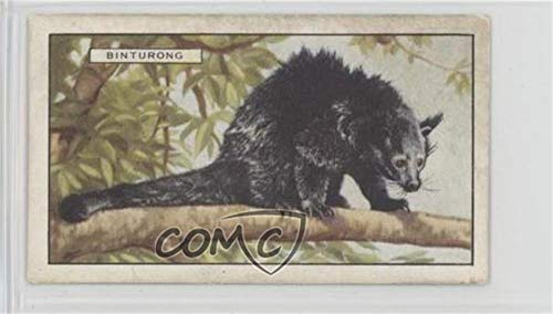 The Binturong Ungraded COMC Good to VG-EX (Trading Card) 1937 Gallaher Wild Animals - Tobacco [Base] #29 from Gallaher Wild Animals