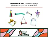 Sweet Feet and Beak Comfort Grip Safety Bird Pumice Perch - Patented Bird Perch Keeps Nails and Beak in Top Condition - Imitates Birds' Life in The Wild - Non-Toxic - Hangs Easily - Large - Green
