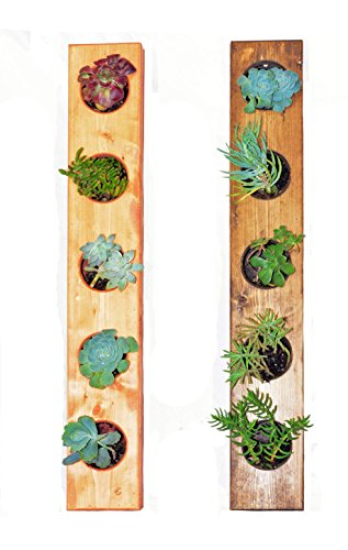 (The Circculent 5-Pocket Wooden Vertical Garden Planter - Living Wall Planter - Creative Display for Succulents, Herbs, Air Plants, Flowers, Indoor & Outdoor Use (Dark Walnut Finish))