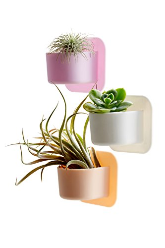 Silicone Shower Plant Holder - Succulent Plant Pot / Cactus Planter Pot. Silicone planter easily sticks to a window or glass. Turn your shower wall into a Garden! (White)