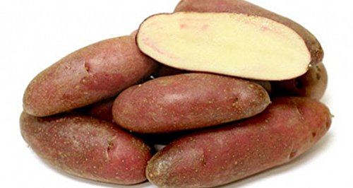 French Fingerling Potato 6 Tubers - Heirloom