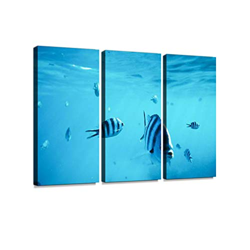 Diving with Fishes 3 Pieces Print On Canvas Wall Artwork Modern Photography Home Decor Unique Pattern Stretched and Framed3 Piece