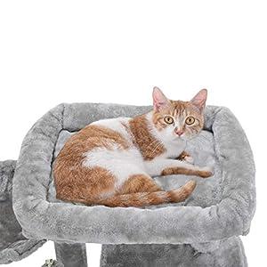 cat-catnias