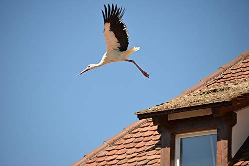 Home Comforts Peel-n-Stick Poster of Stork Animal Rattle Stork White Stork Bird Roof Vivid Imagery Poster 24 x 16 Adhesive Sticker Poster Print