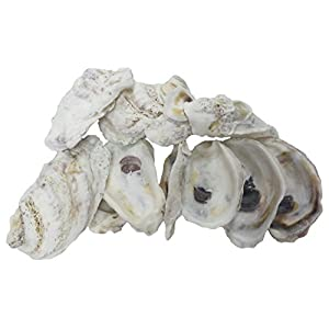 """U.S. Shell Oyster Shells, 4 to 5 inches, 3.75""""-5"""" 49"""