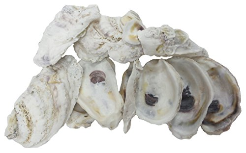 U S Shell Oyster Shells 3 75 product image
