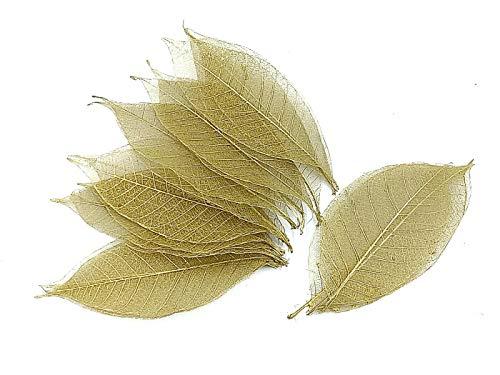 NAVA CHIANGMAI Rubber Tree Leaves - Pack of 100 Skeleton Leaves Decorative DIY Craft, Artificial Leaves Craft Card Scrapbook DIY Handmade Embellishment Decoration Art (Gold)