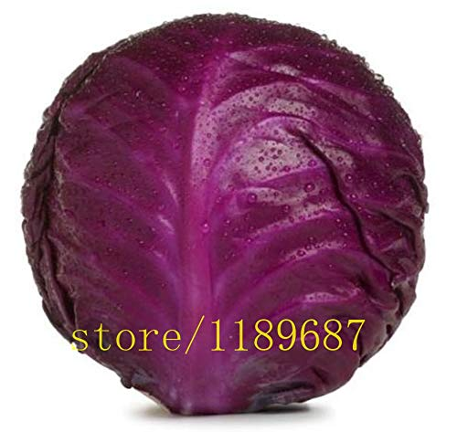 Seed 500pcs/bag Mini Purple Cabbage Plants Brassica Oleracea Organic Vegetable Rare Plants for Home Garden
