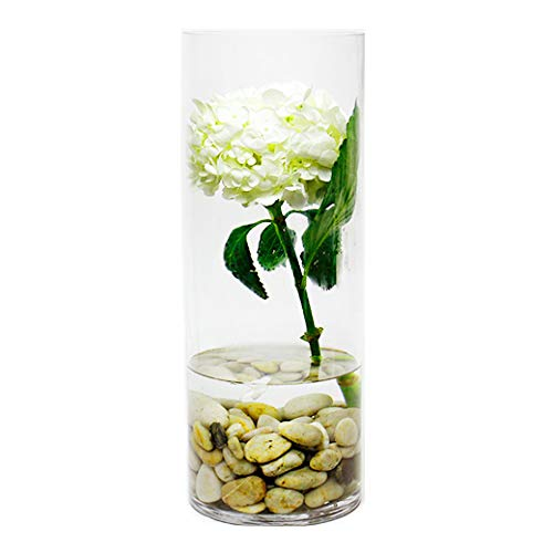 CYS EXCEL Glass Cylinder Vase, Floating Candle Holder, Flower vase, Decorative Centerpiece for Home, Business, Events or Weddings (Pack of 1) 6