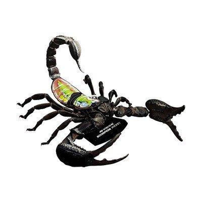 Amazon.com: 4D-Vision Scorpion Anatomy Model: Toys & Games