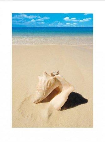 Beach Shell Conch on the Sand Print 60x80cm