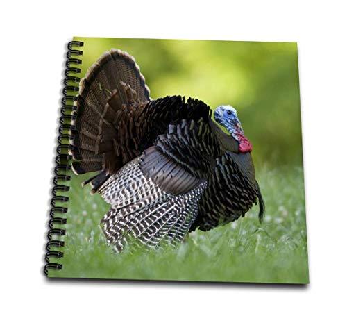 Strutting Gobblers - 3dRose db_209805_2 Wild Turkey Gobbler Strutting, MS Memory Book, 12 by 12