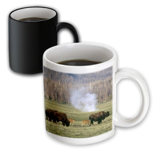 3dRose 97287_3 Yellowstone NP, Bison herd-US51 CSL0005-Charles Sleicher Magic Transforming Mug, 11 oz, Black/White ()
