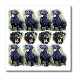 3dRose ht_48742_1 Black Labrador Pattern Iron on Heat Transfer for White Material, 8 by 8-Inch