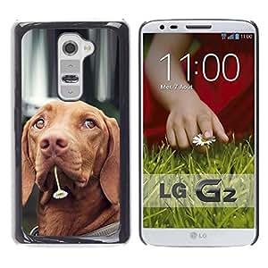 Estuche Cubierta Shell Smartphone estuche protector duro para el teléfono móvil Caso LG G2 D800 D802 D802TA D803 VS980 LS980 / CECELL Phone case / / Vizsla Dog Breed Canine Flower Cute