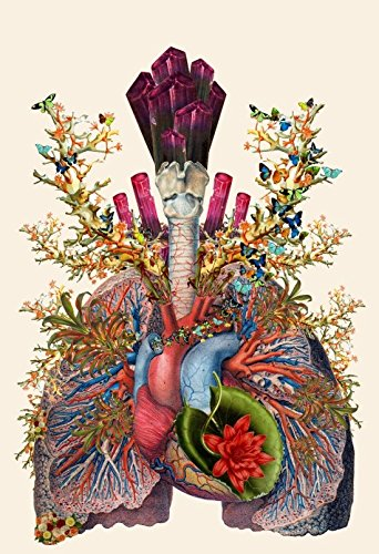 Adore Anatomical Heart Lungs Collage By Bedelgeuse Modern