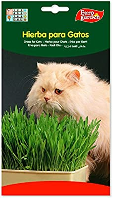 Semillas de hierba para gatos 15 gr. Pack 2 sobres