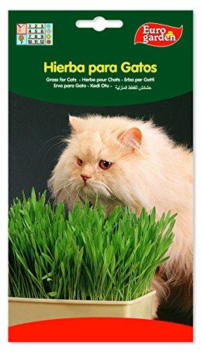 Semillas de hierba para gatos. 15 gr